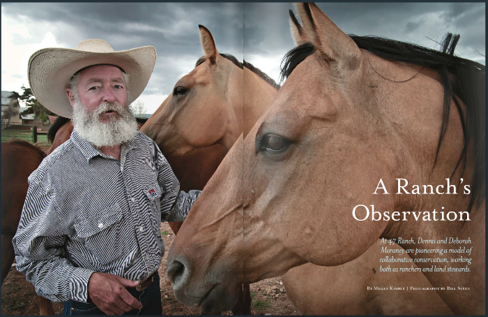 A Ranch's Observation